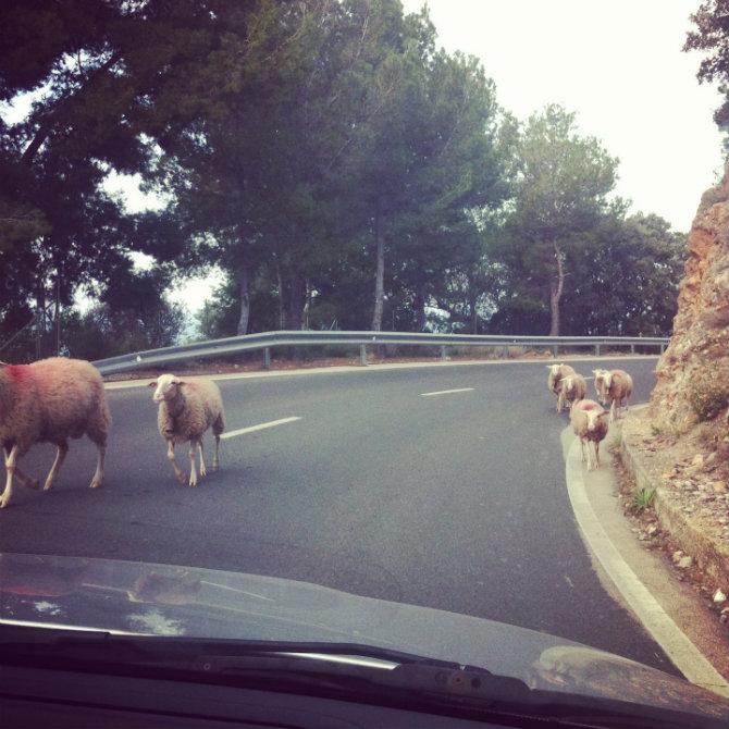 Mallorca 2 2013