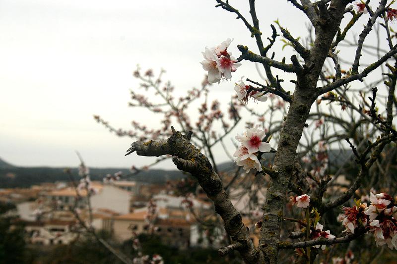 mandelblom